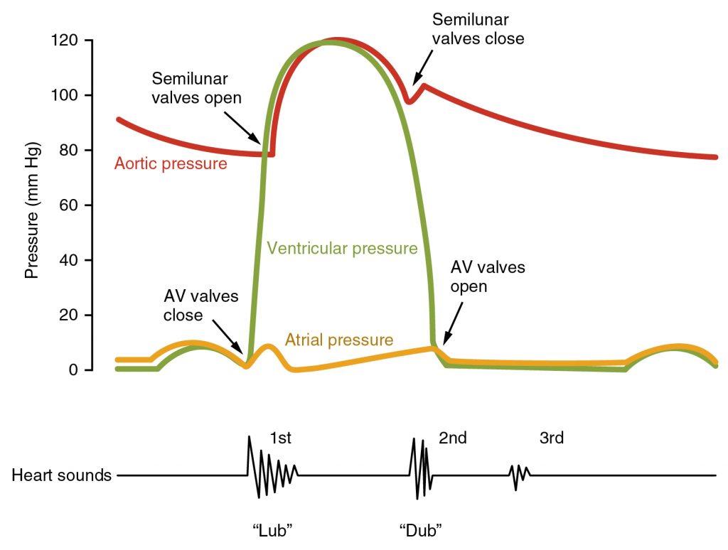 Pressure volume loop of the cardiac cycle (Wigger's Diagram)
